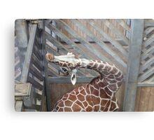 Giraffe yoga Metal Print