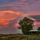 Fiery Sunset on the Farm by Patricia Montgomery