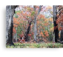 Bushfire Regeneration Canvas Print