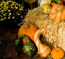 Fall Gourds © by Mary Campbell