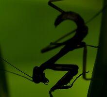 Silhouette of a graceful killer by Steve  Woodman