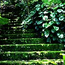 Garden Stairway by slippinghalo