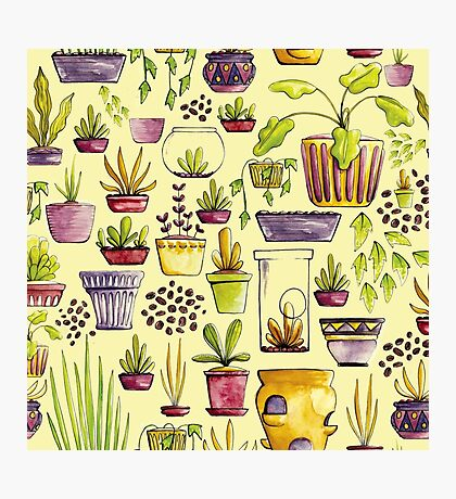 Indoor Plants and Pots Photographic Print