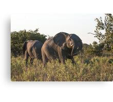 Charging Elephant Canvas Print