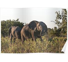 Charging Elephant Poster
