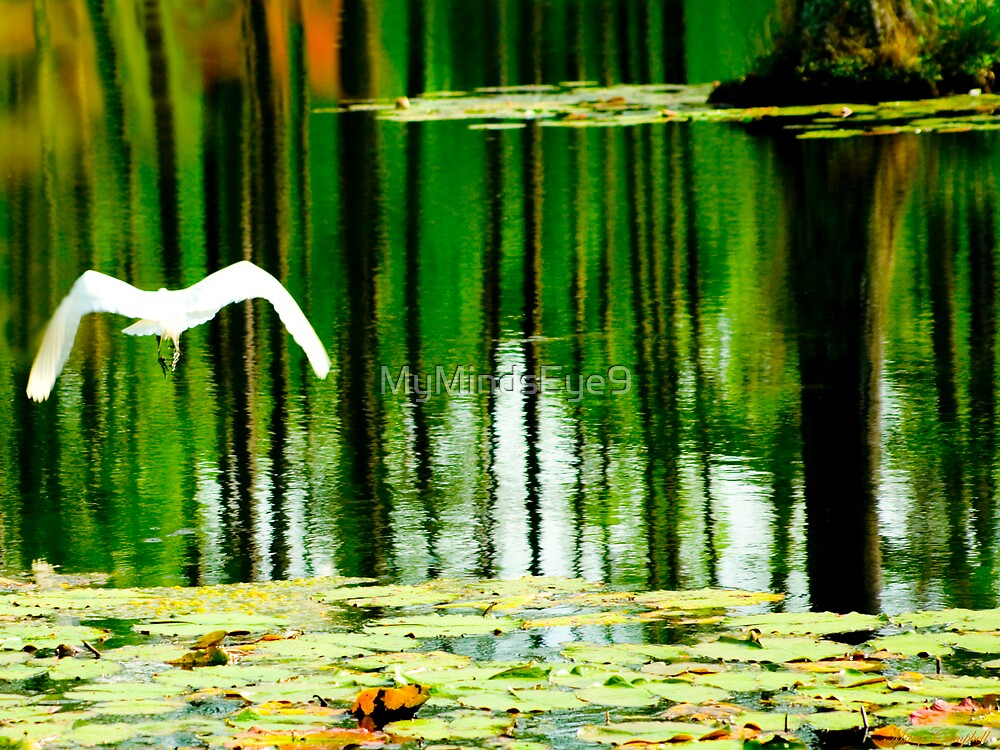 Afternoon relections by Mary Campbell