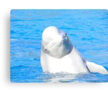 Beluga Smile. Canvas Print