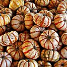 Little Pumpkins by Nikki Collier