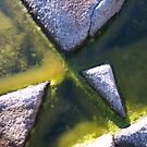 Rock and Algae by Geoffrey