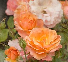 Summer Rose by Aimee Stewart