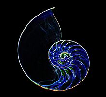 Neon Outline of Half Nautilus Shell #3 by Simon Chen