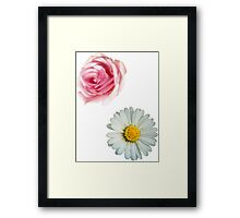Rose & daisy Framed Print