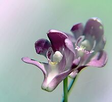 Petite Orchids by Beth A