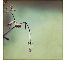 lassitude Photographic Print