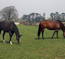 Two beautiful horses by John Quinn