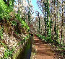 Irrigation duct in Madeira by John Quinn