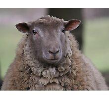 Sheepish Smile Photographic Print