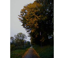 A walk in the Fall Photographic Print