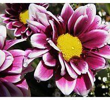Autumn Coloured Dahlia Photographic Print