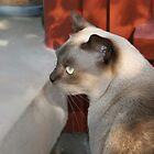 Burmese Cat on Step by Melissa Holland