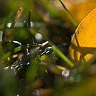 Gold Leaf by Angela  Ardis