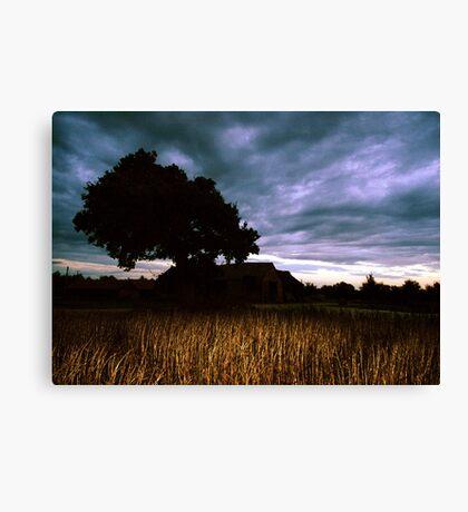 Oak Sky Beanfield Barn Canvas Print