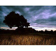 Oak Sky Beanfield Barn Photographic Print