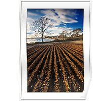 Ploughed field on Strangford shores Poster