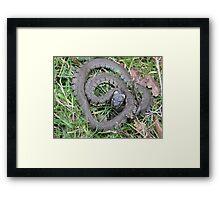 Basking Grass Snake Framed Print