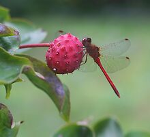 Red Dragonfly by SmilinEyes