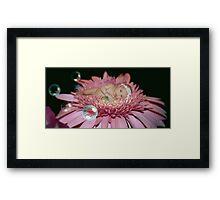 Midnight Blossom (In Color) Framed Print