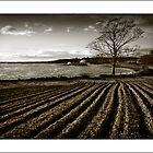 Strangford Field in monochrome by jimfrombangor