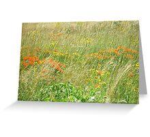 FCMA Meadow - Cape Cod - Barnstable County - Massachusetts Greeting Card