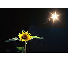 Sunburst o'er Sunflower  Photographic Print