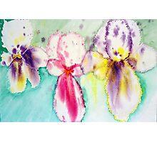 bright and bold irises Photographic Print