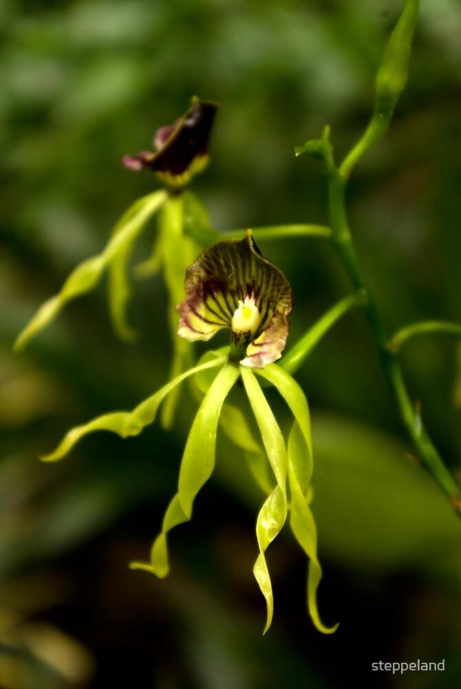 Green Elegance  by steppeland