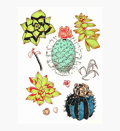 succulents and cacti    Photographic Print