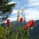 PAINTBRUSH FLOWERS AND MOUNTAINS by MsLiz