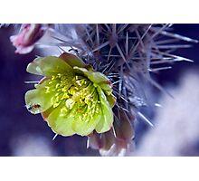 Cactus Bloom Photographic Print