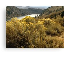 Colorful Colorado Canyon Brush Canvas Print