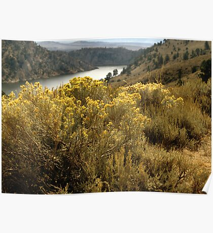 Colorful Colorado Canyon Brush Poster