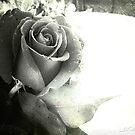 La Rosa by Daniela M. Casalla
