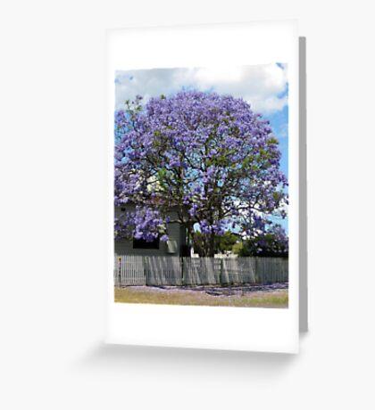 Jacaranda Tree in Bloom Greeting Card