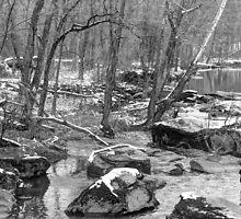 B&W Unami Creek in Winter Grays by MotherNature2