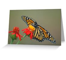 Monarch on Flame Vine Greeting Card