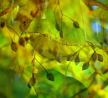 Autumn Vision by Friederike Alexander