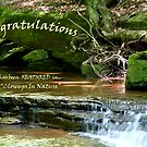 Closeups In Nature Woodland Falls by Geno Rugh