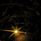 light shining through a tangled mess by 1busymom