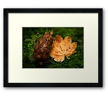 Maple and Douglas Fir Framed Print
