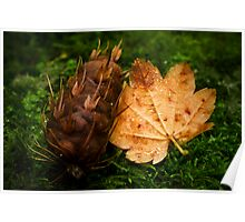 Maple and Douglas Fir Poster